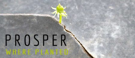Prosper Where Planted